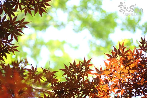紅葉赤緑600.jpg