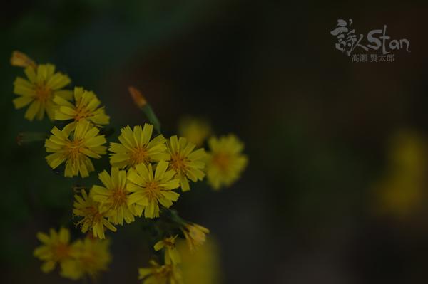 黄色い花600.jpg