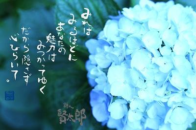 紫陽花web400.jpg