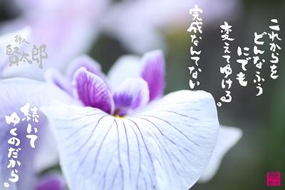 花菖蒲web400.jpg