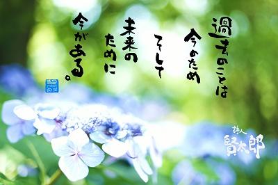 ヤマアジサイweb400.jpg