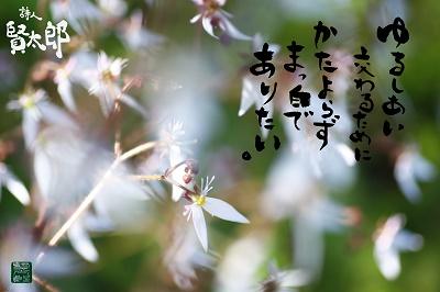 ユキノシタweb400.jpg