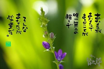 キキョウソウweb400.jpg