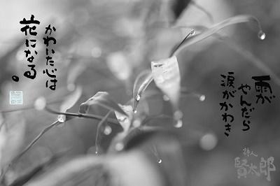 ササノハweb400.jpg