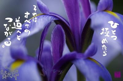 花菖蒲ひとつ極めたらweb400.jpg
