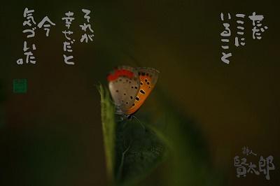 ベニシジミweb400.jpg