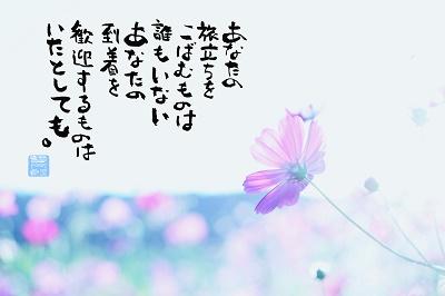 コスモスピンク400.jpg