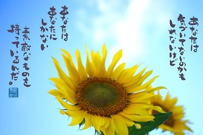 向日葵3400.jpg