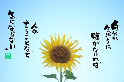 向日葵5400.jpg
