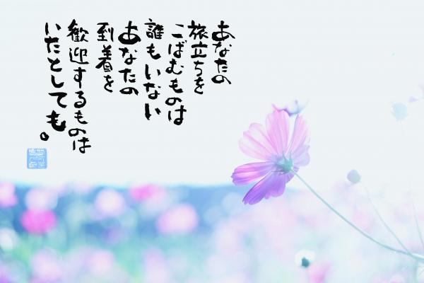 コスモスピンク.jpg