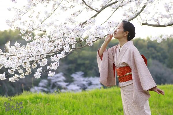 美子桜1.jpg