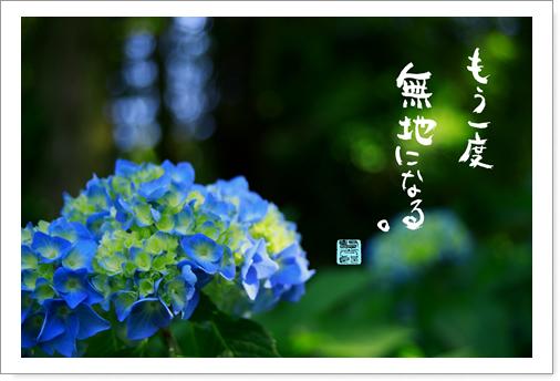 森の紫陽花.jpg