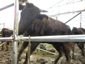 福島県富岡町内で創生ワールドによる動物実験と虐待、死体放置1