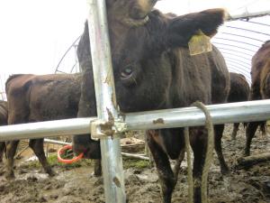福島県富岡町内で創生ワールドによる動物実験と虐待、死体放置3