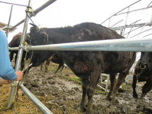 福島県富岡町内で創生ワールドによる動物実験と虐待、死体放置4