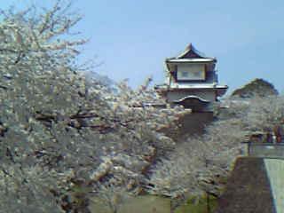 石川門と桜2