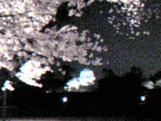 夜桜と菱櫓