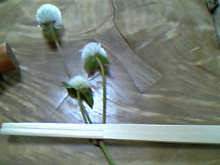 花川  箸置き