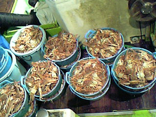 蟹!2007年初物♪