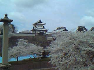 石川門と桜1