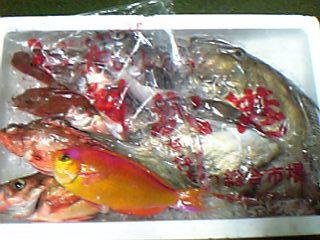 仕入れた魚