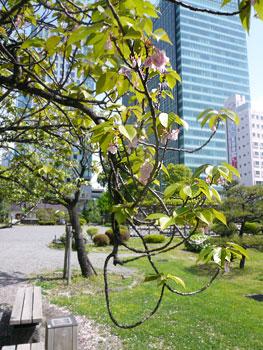 こんな桜もあるんですね