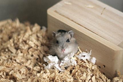 まるでネズミ