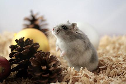 クリスマス写真6