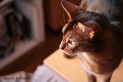逆光のお猫様