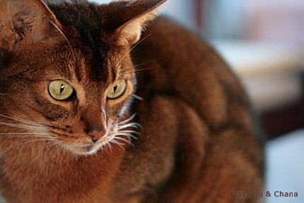 お猫様の肉体美