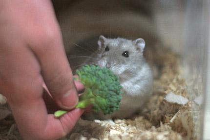 ブロッコリー好き