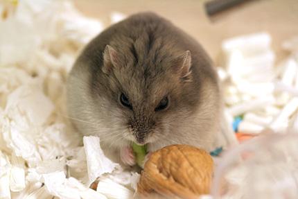 モモと小松菜