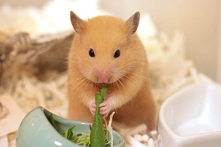 ハナと小松菜