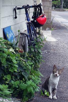大三島リモーネと猫