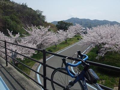 しまなみ海道桜のシーズン