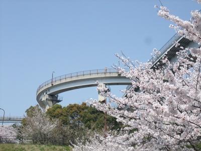しまなみ海道の春の桜と来島海峡大橋