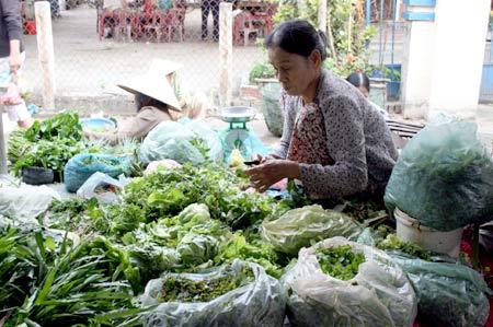 パクチー他たくさんの野菜