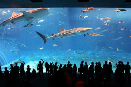 美ら水族館