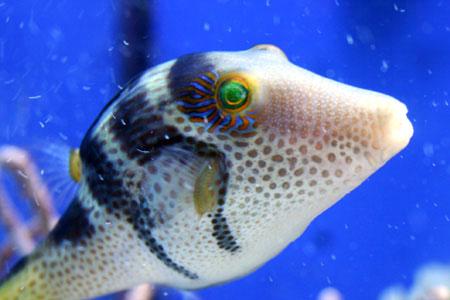 沖縄の水族館にて