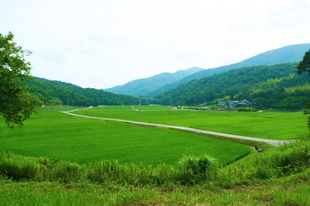 田園 徳島 遠足 自然