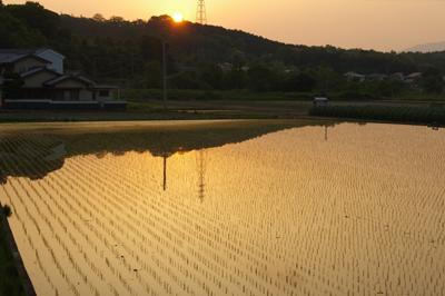 田圃夕景.jpg