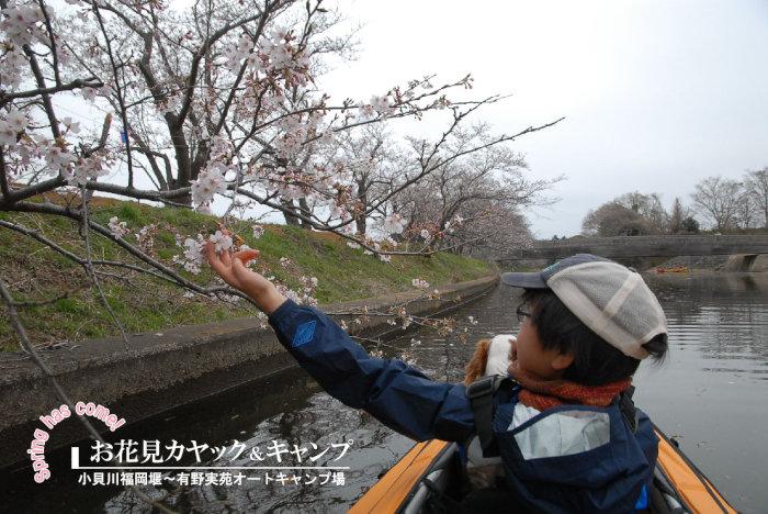 お花見カヤック&キャンプ
