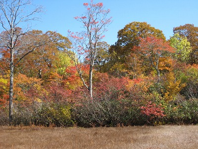 s-紅葉の湿原.jpg