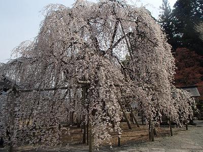 s-尾崎の寺.jpg
