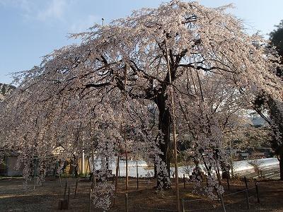 s-山口の神社2.jpg