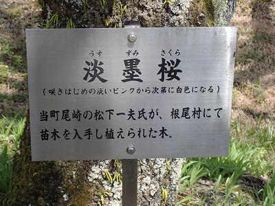 s-萩10.jpg