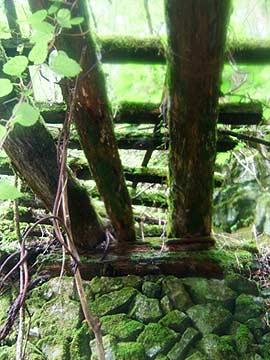 木造橋を下から見上げる