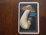 東欧雑貨 チェコのキノコカード