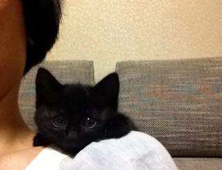 ipadに夢中の子ネコ