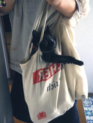 レトロビアンカ 我が家の子ネコ
